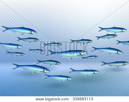Fish Colony School Swimming Elongated In Movement Direction Group Shape Water Transparent Background