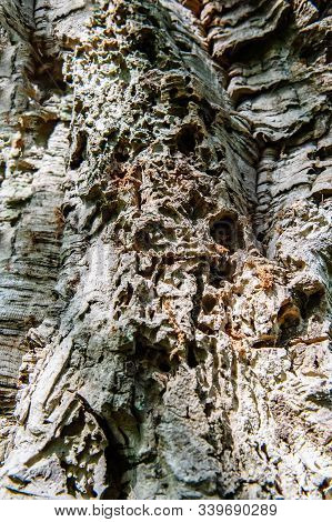 The Texture Of Old Wrinkled Leathery Wood. Tree Bark Damaged By Pests And Diseases, Water And Wind.