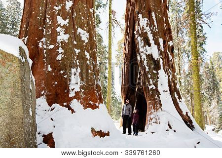 Family Of Two, Father And Son, Enjoying The View Of Giant Sequoia Trees In Sequoia National Park Dur