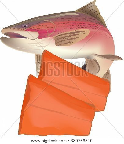 Salmon Trout Fillet With Fish Salmon Trout Fillet With Fish