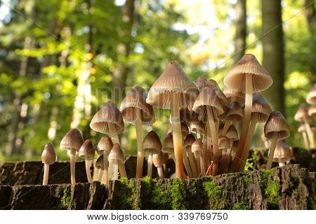 Mushrooms on tree trunk Closeup Macro plant Nature background Trees Nature background Nature background Mushroom natural environment autumnal Nature background Nature background Mushrooms Autumn forest Mushrooms Nature background outdoor Nature background