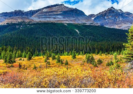 The multicolor autumn grass on the shores of Lake Bow. The magnificent Rocky Mountains of Canada. The concept of active, environmental and photo tourism