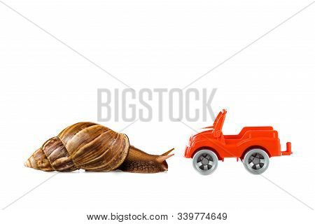 Slimy Brown Snail Near Red Toy Car Isolated On White