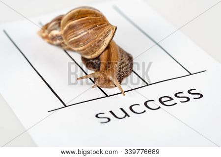 Close Up View Of Slimy Brown Snail On White Paper With Success Lettering Isolated On White