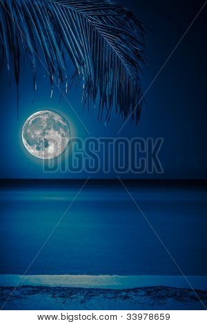 Beach at night with a  full moon reflecting on the water and a coconut palm on the foreground toned in blue shades