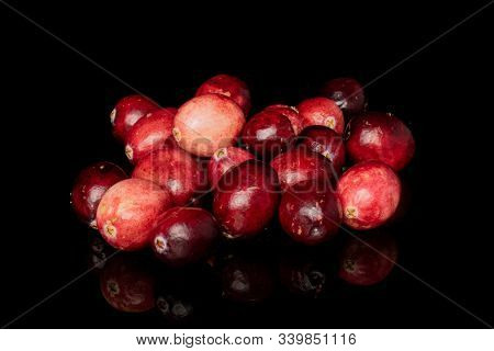 Lot Of Whole Fresh Red Cranberry Heap Isolated On Black Glass