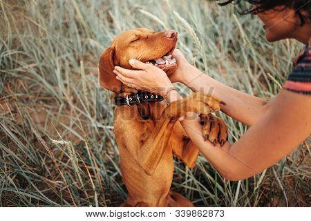 Happy Vizsla Dog Portrait With Owner Hands Petting Him