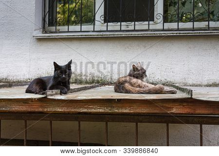 Two Stray Cat Lying On The Tin Roof Under The House Window And Looking At The Camera