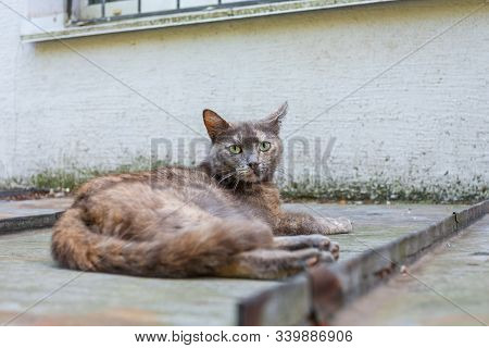 Alone Stray Cat Lying On The Tin Roof Under The House Window And Looking At The Camera