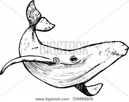 Illustration Of A Whale Underwater In A Dotwork Style.