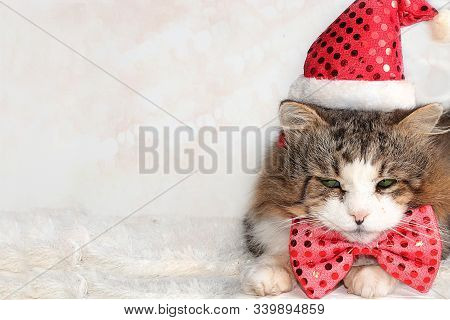 New Year's Funny Cat In A Festive Bow And Ears On A Background Of Bokeh And A Live Christmas Tree In