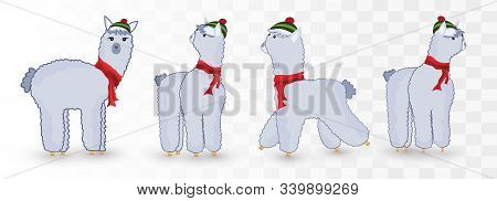 Collection Of Christmas Cute Lamas Isolated On Transparent Background.blue Lamas. Little Beautiful L