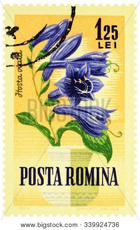 Moscow, Russia - December 16, 2019: Stamp Printed In Romania Shows Hosta Flower (hosta Ventricosa),