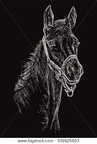 Foal Portrait With Halter. Horse Head In White Color Isolated On Black Background. Vector Hand Drawi