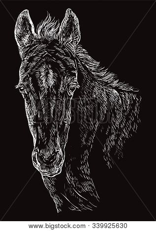 Cute Pony Foal Portrait. Young Pony Head In White Color Isolated On Black Background. Vector Hand Dr