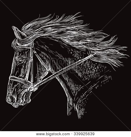 Horse Portrait With Bridle. Beautiful Horse Head With Long Mane In Profile In White Color Isolated O