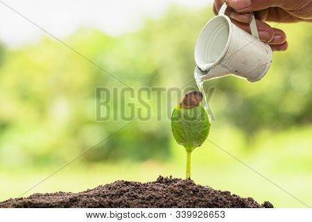 Hands Holding A Small Bucket To Water The Plants Watering Young Tree Green.planting Seedlings To Red