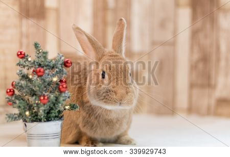Adorable Rufus Rabbit Looks Very Cute Next To Small Decorated Christmas Tree, Selective Focus
