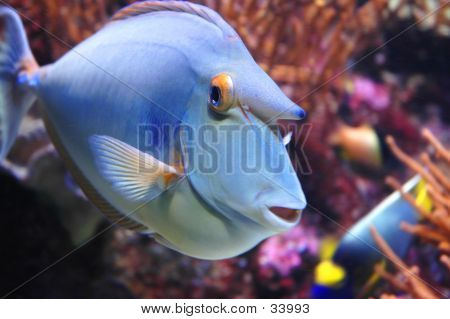 close up of a marine fish poster