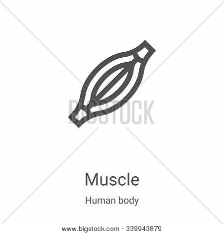 muscle icon isolated on white background from human body collection. muscle icon trendy and modern m