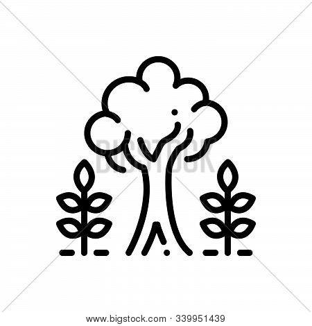 Black Line Icon For Maturity Tree Plant Majority