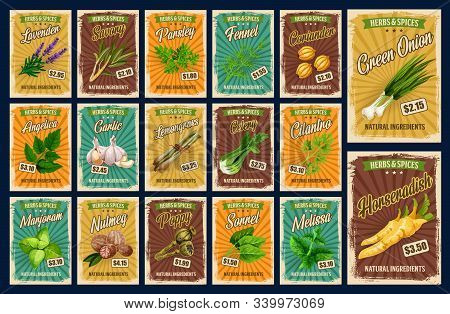Spices, Farm Market Herb Seasonings And Organic Food Condiments Price Cards. Vector Lavender, Savory