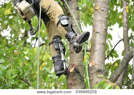 Overalls For Climbing Trees. Lumberjack Works With A Chainsaw. In Special Clothes. Professional In H
