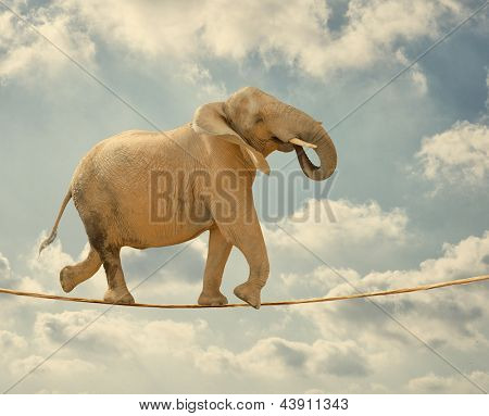 Elephant In Sky Walking On Rope