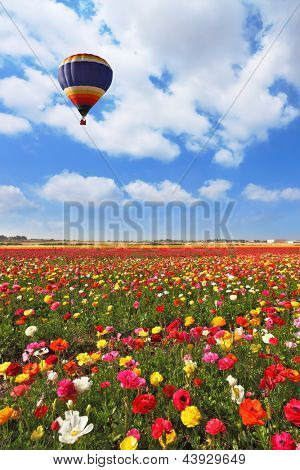 Over the blossoming field of flying a balloon. A lot of lovely blooming flowers and shining clouds.
