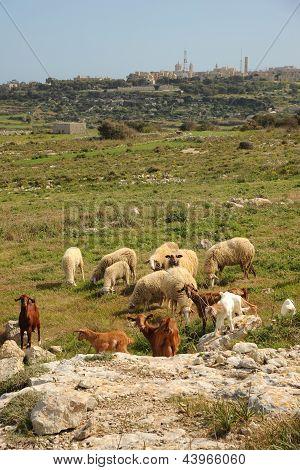 Mediterranean farming