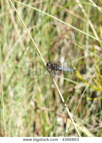 Dragonfly Near River