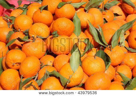Background of freshly plucked tangerines