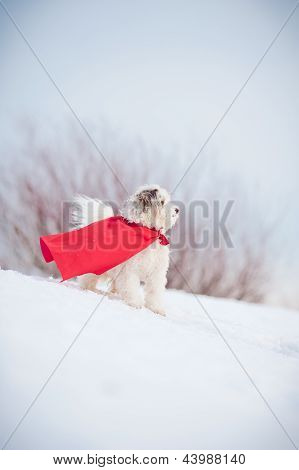 funny curly super hero dog wearing the red cloak poster