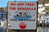 do not feed the seagulls sign in Looe poster