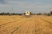 combine machine equipment pass harvest wheat crop in agricultural field and stork look for food on august. poster