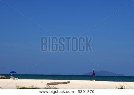 Seashore in Paradise Wild Nature