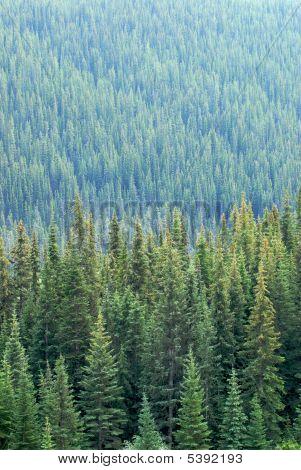 Mountain Trees Portrait