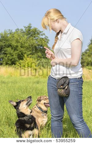 Dogs listen to the commands of the female dog trainer poster