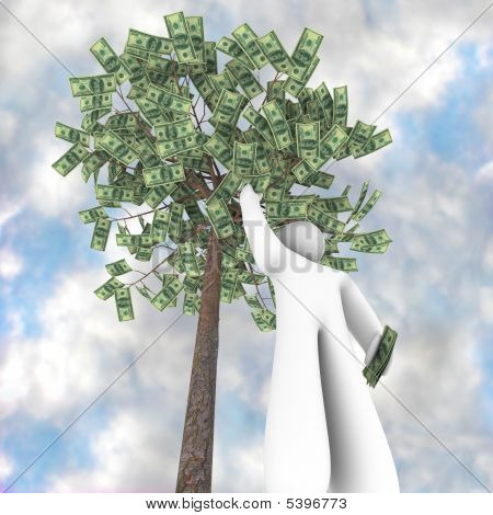 The Money Tree - It Does Grow On Trees