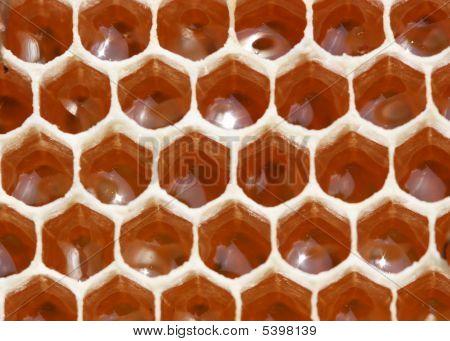 Nectar And Honey Pantry.