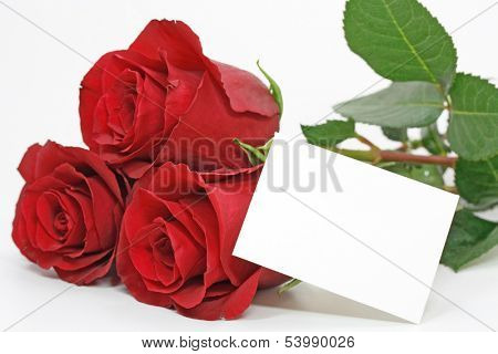 red roses with a blank note on white
