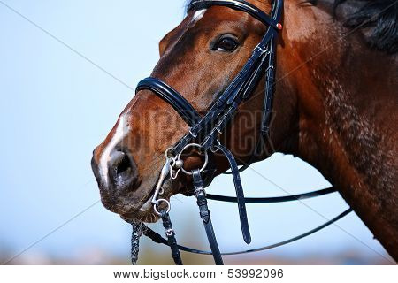 Portrait Of A Sports Brown Horse.