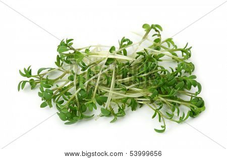 Garden cress isolated on white background