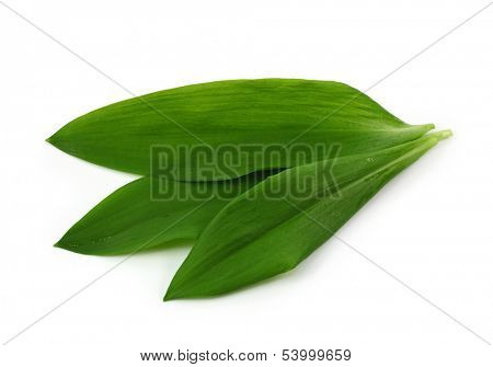 Ramsons isolated on white background