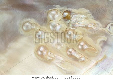 Mother of pearl with real pearls in a sea shell