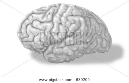 Learning Human Brain Grayscale