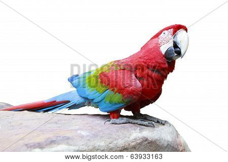 Green-winged Macaw, Ara Chloropterus Perching On Rock Ground Isolated White Background