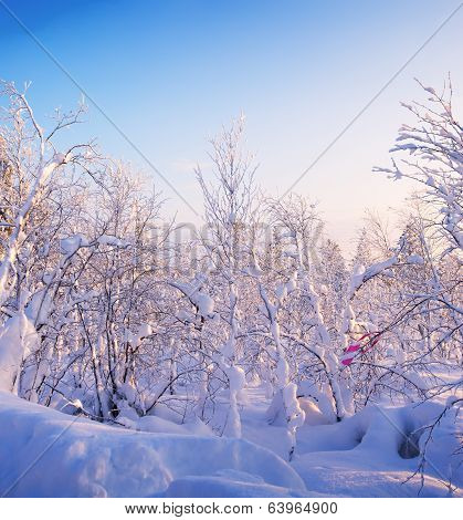 Winter Forest. Sunrise, Soft Blue And Pink Tones.
