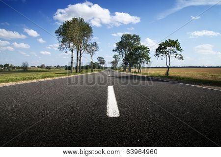 Asphalt Road Among Fields And Forests.
