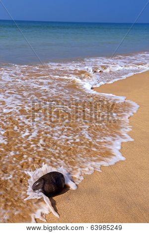 Coconut On A Beach